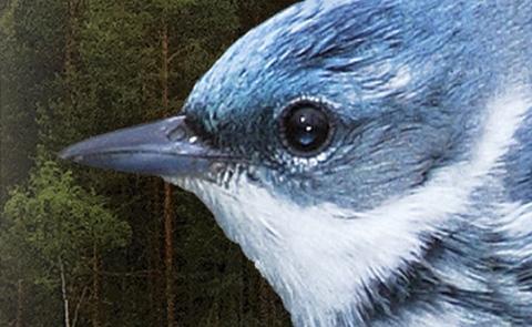 """Detalj ur omslaget till """"Frihet"""". Brombergs förlag."""
