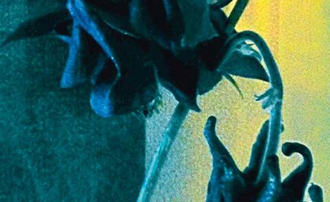 """Detalj ur omslaget till """"konsten att dö"""". Norstedts förlag."""