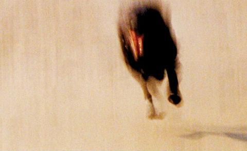 """Detalj från omslaget till """"Oryx och Crake"""". Norstedts förlag."""
